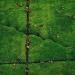 Cueillette du thé vue du ciel dans la région de Kericho - Yann Arthus-Bertrand